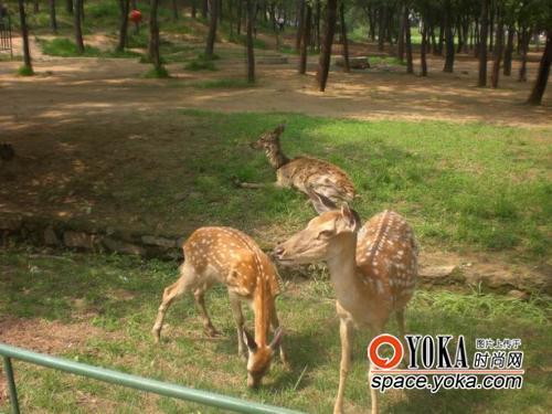 可爱小鹿图片多图,小鹿斑比简笔画图片