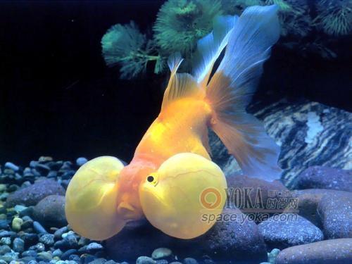 可爱的小金鱼图片图片下载