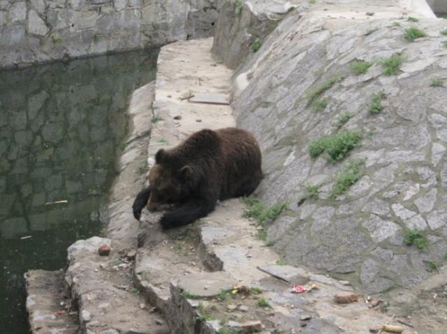 大黑熊老师简笔画